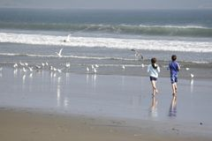 Beach Pursuit. A young boy and young girl chase seagulls on the beach Royalty Free Stock Photography