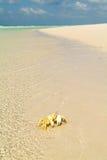 The beach of Qalansiya on the island of Socotra Stock Photography