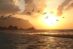 The beach of Qalansiya at Socotra island Royalty Free Stock Image