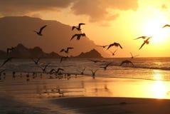 The beach of Qalansiya on Socotra island Royalty Free Stock Photography