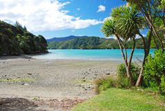 Beach on Queen Charlotte track Royalty Free Stock Image