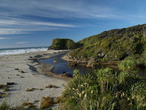 Beach and rainforest. On southern island in new zealand Stock Image