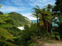 Beach and rainforest. On southern island in new zealand Stock Photo