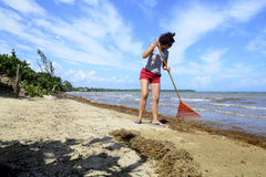 Beach Raking Royalty Free Stock Images