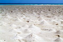 The beach of Ras Irisseyl on the island of Socotra Royalty Free Stock Image