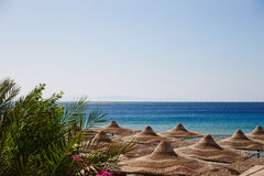 Beach, Red Sea, umbrellas, chaise lounges, branches of date palm Stock Photo