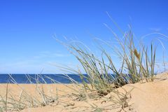 Beach Reeds Royalty Free Stock Images