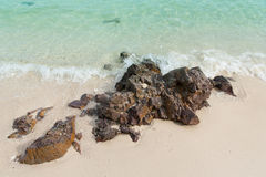 Beach. The reef in Impact sea the morning Stock Image