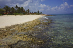 Beach, reefs, palm trees in Cuba Royalty Free Stock Photography