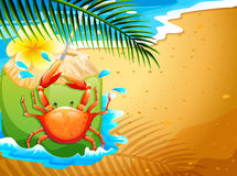 A beach with a refreshing coconut drink and a crab Royalty Free Stock Photos