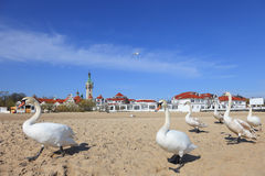 Beach Resort. The beach in Sopot and swans, Poland Stock Image