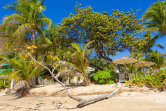 The beach at a resort in the caribbean Royalty Free Stock Photo