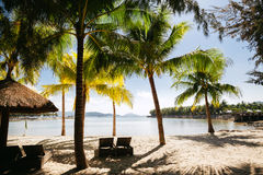 Beach resort with palms tropical Royalty Free Stock Image