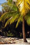 Beach resort with palms tropical Stock Photos