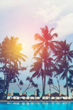 Beach resort on the sea with palm trees Royalty Free Stock Photos