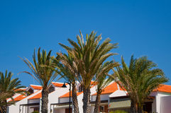 Beach resort side with palm  frounds . Stock Image