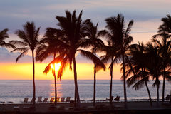 Beach Resort Sunset. A picture of a beach resort with beach chairs and palm trees during sunset Royalty Free Stock Image