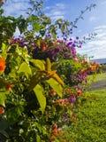 Garden on reunion island. This is a beach, at reunion island , water, tourism, sun, sea Stock Photo