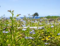 Seaside on reunion island. This is a  beach, at reunion island , water, tourism, sun, sea Royalty Free Stock Photo