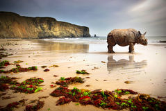 Beach Rhino. Surreal scene of a big Rhinoceros in an empty beach Royalty Free Stock Photos