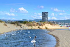 Beach river birds Royalty Free Stock Images