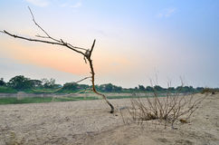 Beach riverside Chaopraya in thailand. Branch, Dead twigs Royalty Free Stock Photos