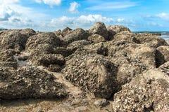 The beach rock Royalty Free Stock Photo