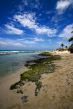 Beach rock and stone cabin and palm in  republica dominicana Stock Photography