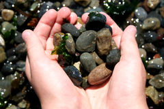 Beach Rocks. From Puget Sound stock photography