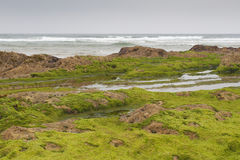 Beach with rocks covered with green algae Royalty Free Stock Photo
