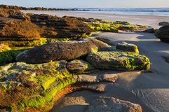 Beach Rocks at Daybreak Stock Photography