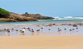 Beach, rocks and seagulls Stock Photos