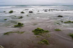 Beach with rocks and seaweed Royalty Free Stock Images