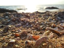 Beach. Rocks Shells ocean Royalty Free Stock Images