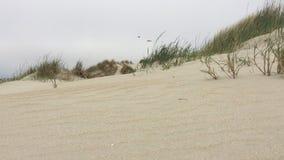Beach on Romo island - Denmark. stock video footage