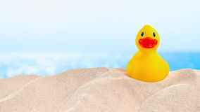 On the Beach - rubber duck on a sand dune in front of beautiful azure sea  - seamless loop - ProRes stock video