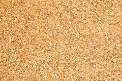 Beach sand background Stock Photography