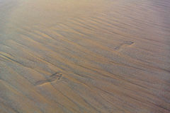 Beach sand background. Footprints in the sand. Royalty Free Stock Photography