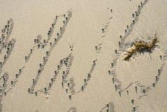 Beach sand. Beautiful pulom on the beach Stock Photo