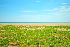 Beach sand and blue sky Stock Images