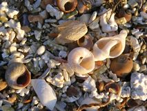 Detail of beach sand with sea shells stock image