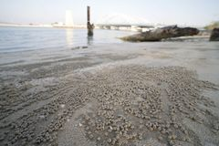 Beach sand bubbler crab ground view royalty free stock photos