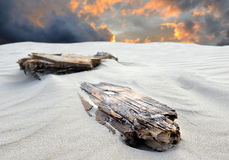 Beach sand and the bury log Stock Images