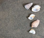 Clean beach sand with seashells Royalty Free Stock Photo