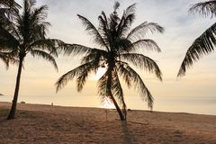 Beach sand and coconut tree with sunrise in morning. In Beachfront Stock Image