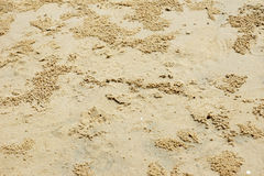Beach sand of crab markings Royalty Free Stock Photography