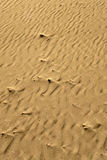 Beach sand detail. Costal beach sand texture detail Stock Images