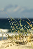 Beach Sand Dune. Image taken of some grass in a sand dune on the beach royalty free stock image