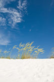 Beach sand dune grasses Stock Photo