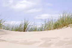 Beach sand dune grasses Royalty Free Stock Image